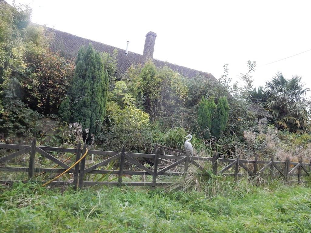 Fake herons Haywards Heath Circular