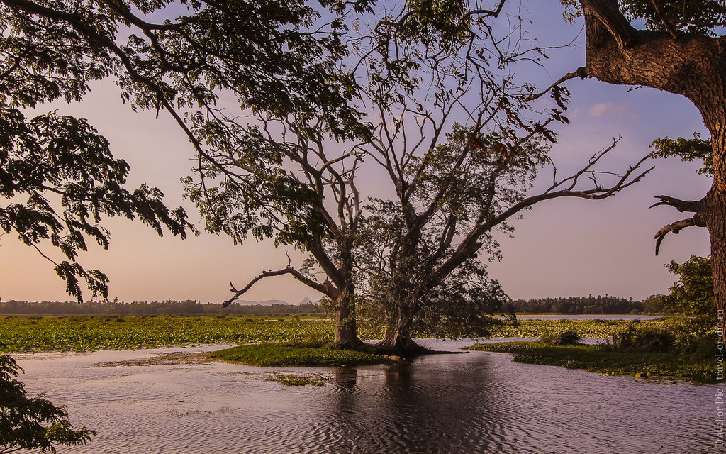 24.06-Tissamaharama-Sri-Lanka-canon-1500px-025