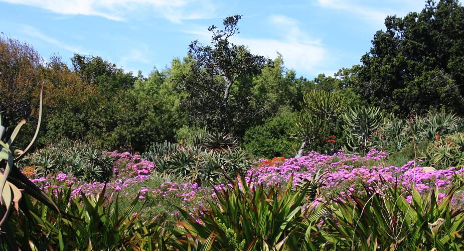 Genieten in het groen in Kaapstad: tips over Kaapstad, Zuid-Afrika | Mooistestedentrips.nl