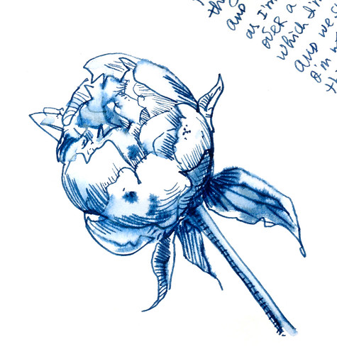 Sketchbook #105: Peonies