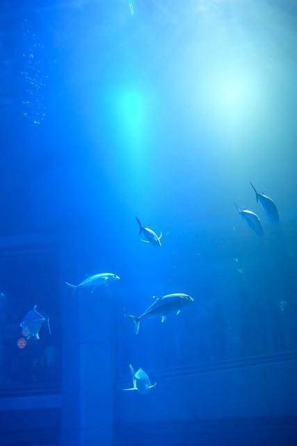 """Osaka Aquarium """"Kaiyukan"""" (X-Pro2 + XF23mm F2 R WR)"""