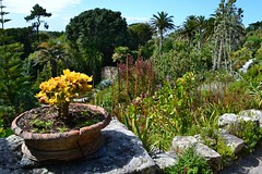 Abbey Gardens, Tresco, Scilly Isles