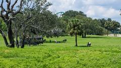 A wild safari at Busch Gardens Tampa Bay