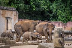 Elefanten_MG_1490