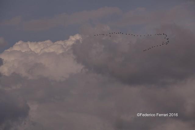 17 torre flavia formazione a v cielo nuvole