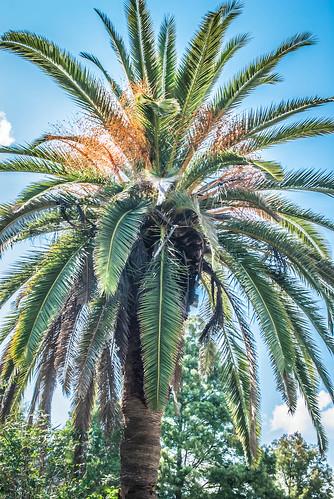 Campus Palm