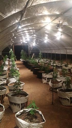 Diy Steel Hoop House Growing In Greenhouses