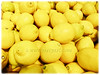 Citrus limon (Lemon)