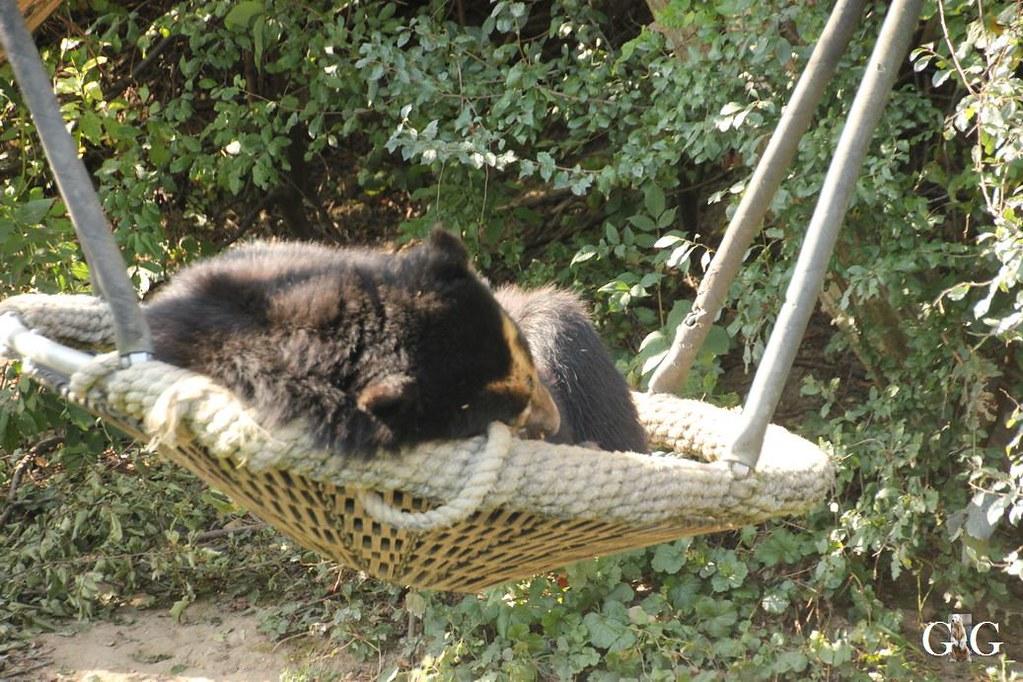 Ausflug Zoo Wien 26.08.201726