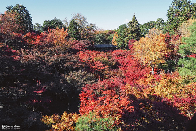 十年,京都四季 | 卷二 | 年月輪轉 | 24