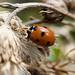 ladybird_scene