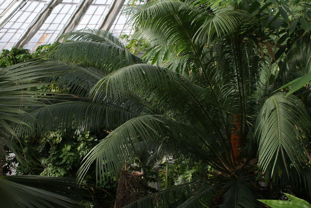 Vue sur la canopée des serres du jardin botanique de Copenhague.