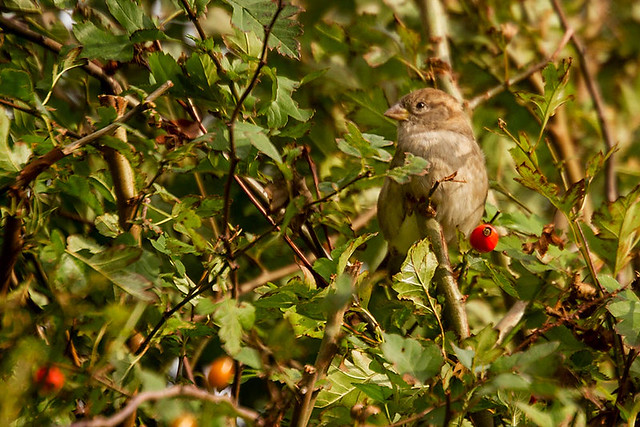 Sep 17 - Who will love a little sparrow?