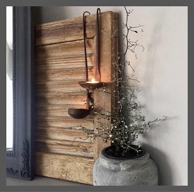 Luikje lepels plant