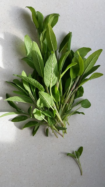sage seeds belonging to PodHause
