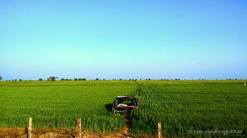 Fields enroute Bundi