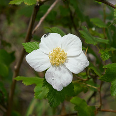 1707 Raspberry on the Brush Corral Trail