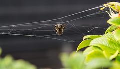 Little spider man...