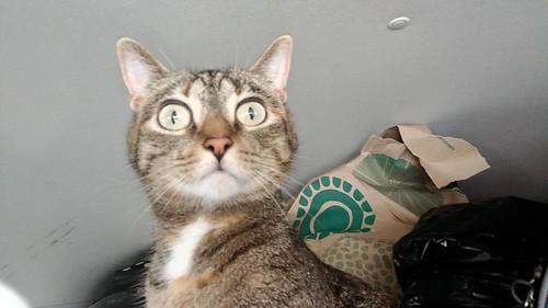Focused cat [unfocused]