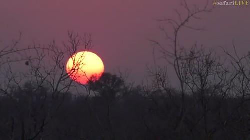 sunrise africa safarilive djuma sky sun trees southafrica 500v20f