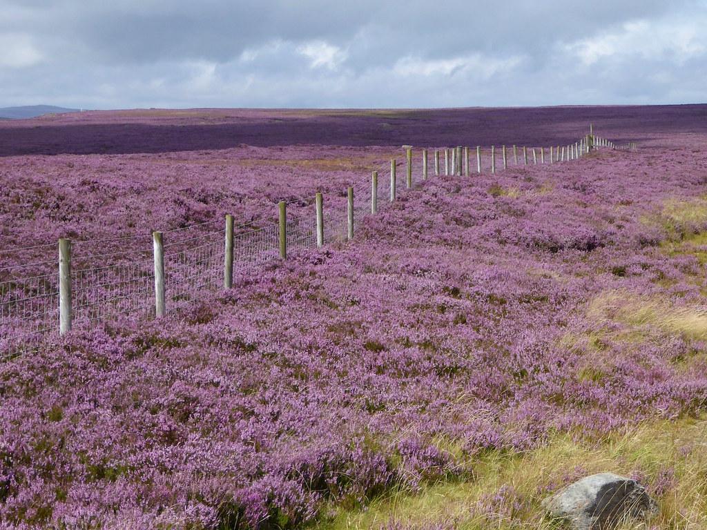 Fence Sheffield to Bamford walk