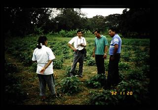 Soybean Breeding In Boliche = 大豆栽培試験