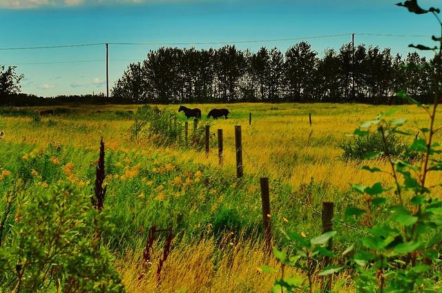 From behind the post, Highway 16, Saskatchewan