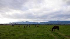 Recibimiento de caballos