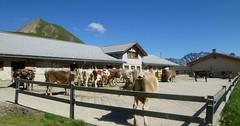 Alp Bella, Samnaun
