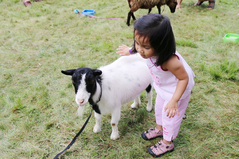 eagle-rock-animals-goat-sheep-kid