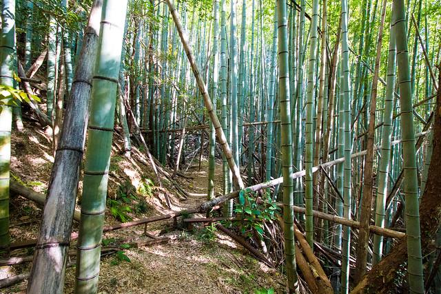 20161210-浜石岳-0417.jpg