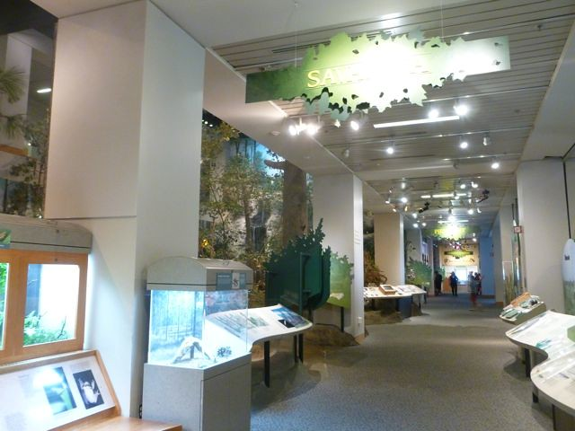 Museum of Natural Science Raleigh at From My Carolina Home