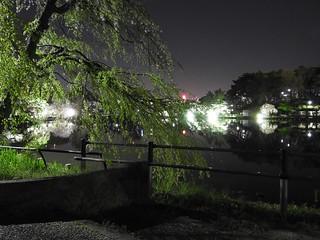 千葉公園綿打池 夜桜ライトアップ07