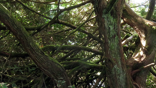 Tangle of trees Remains of a shipwreck on Ucluelet's Wild Pacific Trail