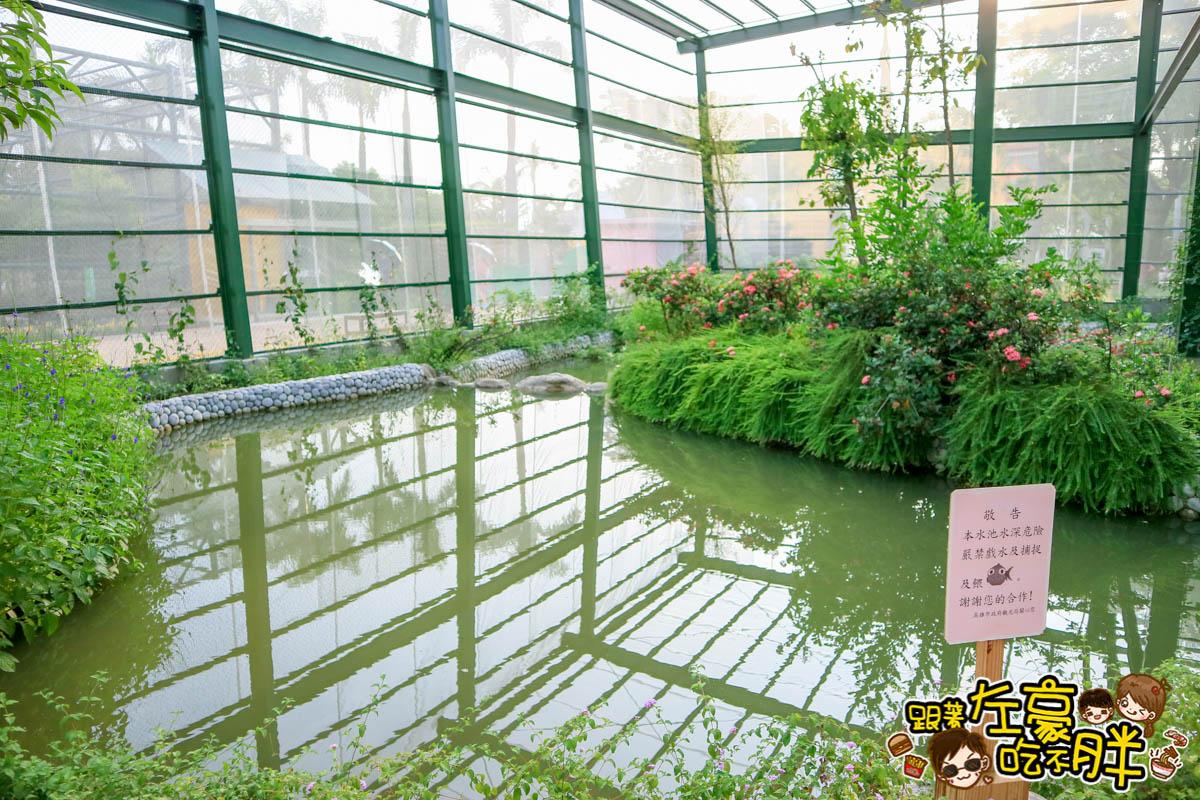 高雄金獅湖蝴蝶園-29