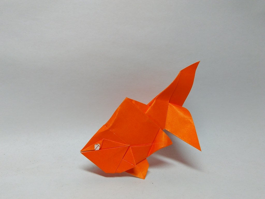 Goldfish by jack dreyil by zephyr liu august 2017 origami goldfish by jack dreyil by zephyr liu august 2017 origami pinterest goldfish and origami jeuxipadfo Image collections