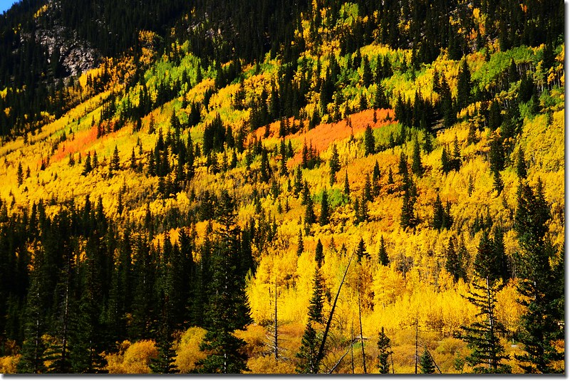 Fall colors, Guanella Pass, Colorado (9)