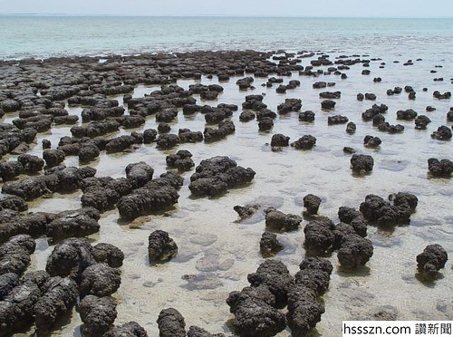 1200px-Stromatolites_in_Sharkbay-640x476_640_476