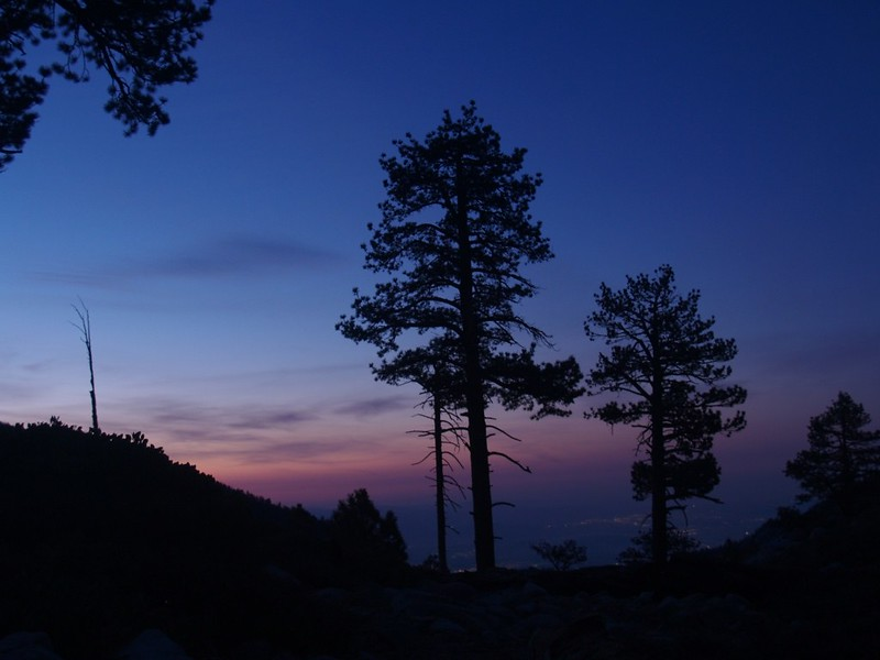 Dawn Pine Tree silhouettes from Mineshaft Flat