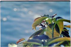 Leica Life #16