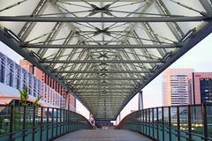 The Bridge to