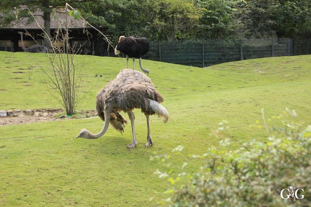 Besuch Zoo Berlin 13.08.17155