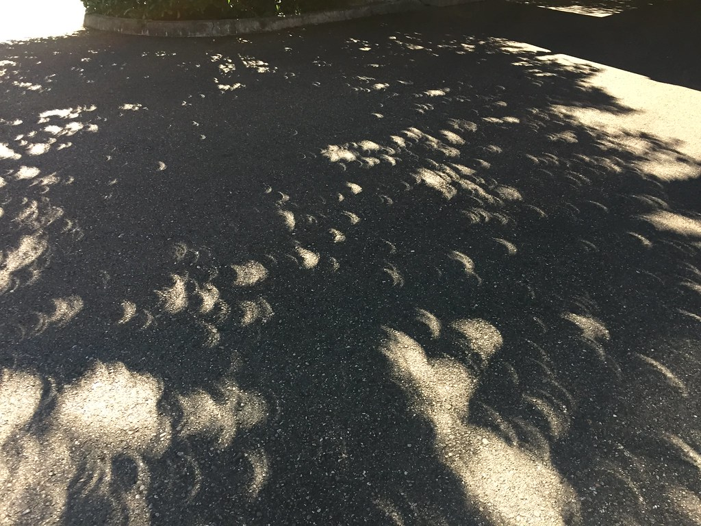 Eclipse through the leaves. Copyright 2017 Jonny Eberle.