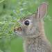 Little Bunny-43122.jpg