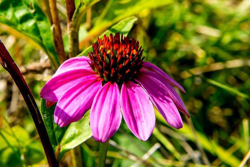 John M. Craddock Wetland Nature Preserve - August 25, 2017