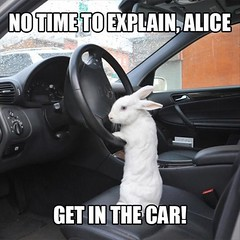 So it's going to drive the car right into a burrow? Okay. 😂  #cars #memes #aliceinthewonderland #alice #rabbit #animalsincars #funnypictures #wednesday #canada