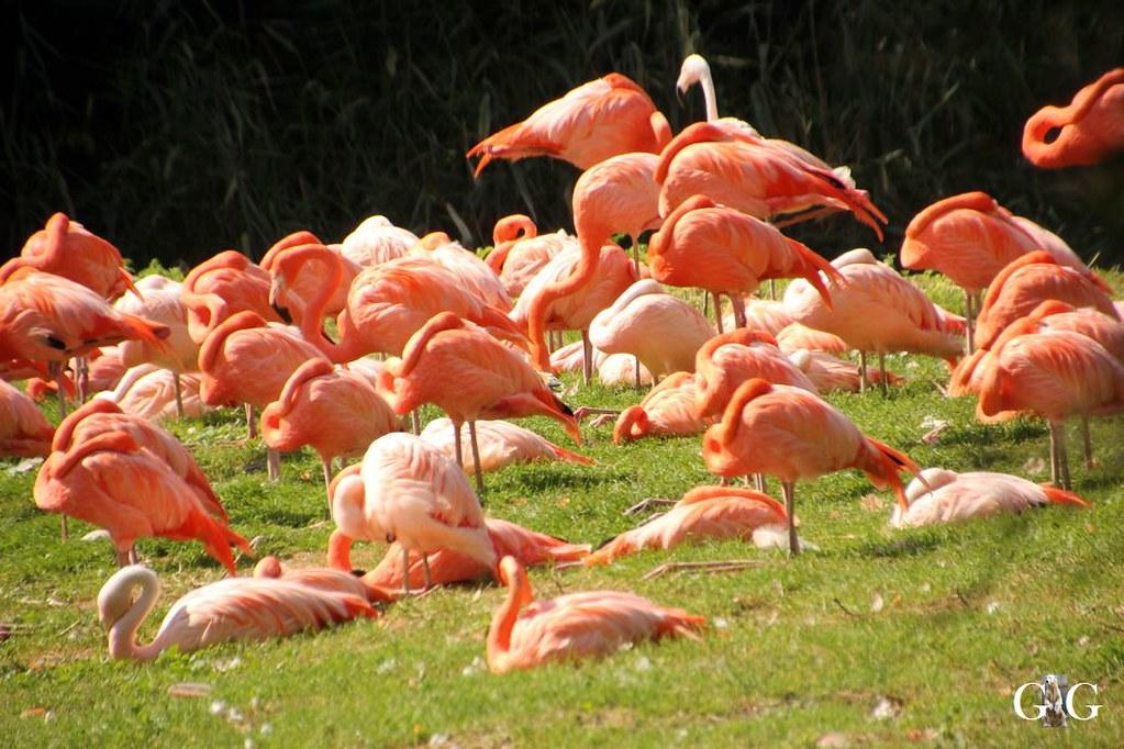 Besuch Tierpark Friedrichsfelde 20.08.1765