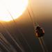 Ladybug in a Barleyfield enjoying Sunset by Theo Crazzolara