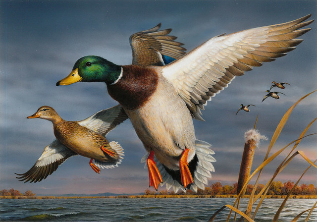 Bob Hautman's acrylic painting of a pair of mallards is the winner of the 2017 Federal Duck Stamp Art Contest. Credit USFWS.