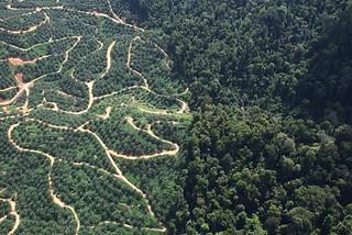 palmoilplantation_mongabay
